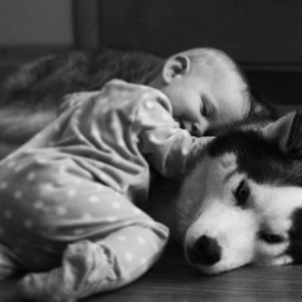 the-voice-of-silence-no-more:  #adorable #baby&dog #husky #baby #cute #love