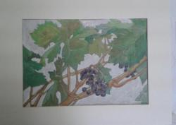Grapes in a Vine . Watercolor. Sorry, it's a fuzzy pic.