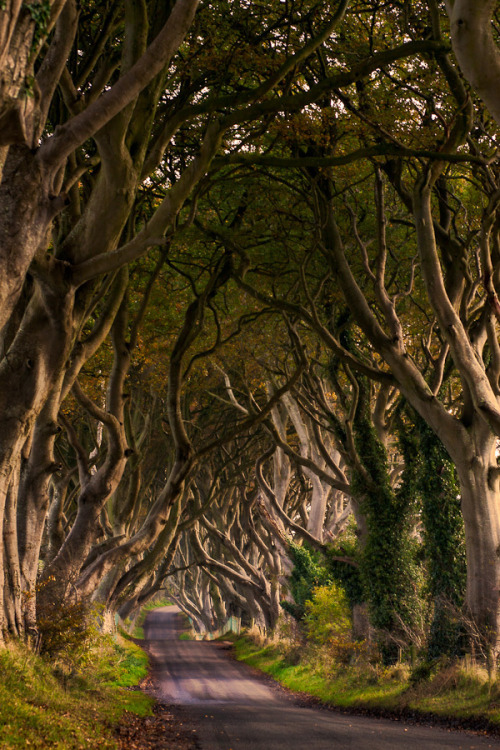 bnreimels:  allthingseurope:  The Dark Hedges, Northern Ireland (by  Maximilian Pilz)
