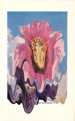 mndfld:  My second melted cactus flower test…