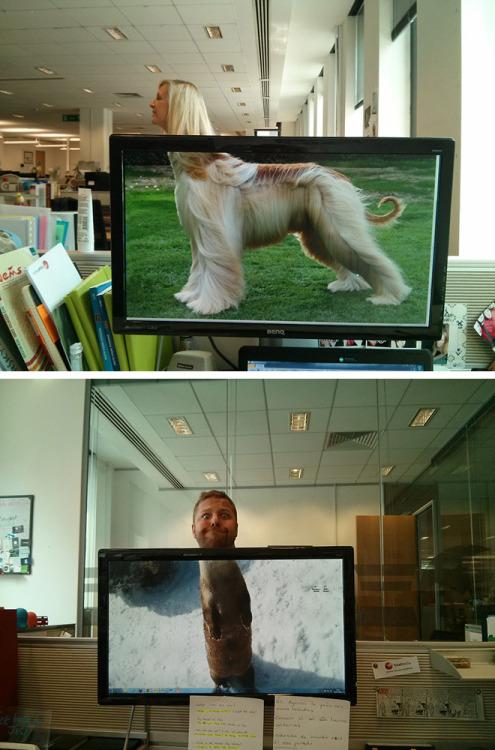 unamusedsloth:  Office Safari. [source]