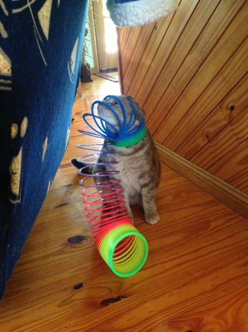 sofapizza:  you win this round, slinky.