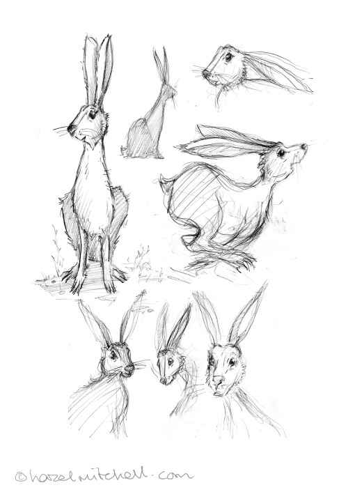 More hares today.