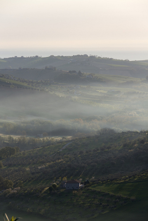 celestial-navigation:   Misty morning over the olive groves and out to sea. Citta Sant'Angelo, Abruzzo, Italy.