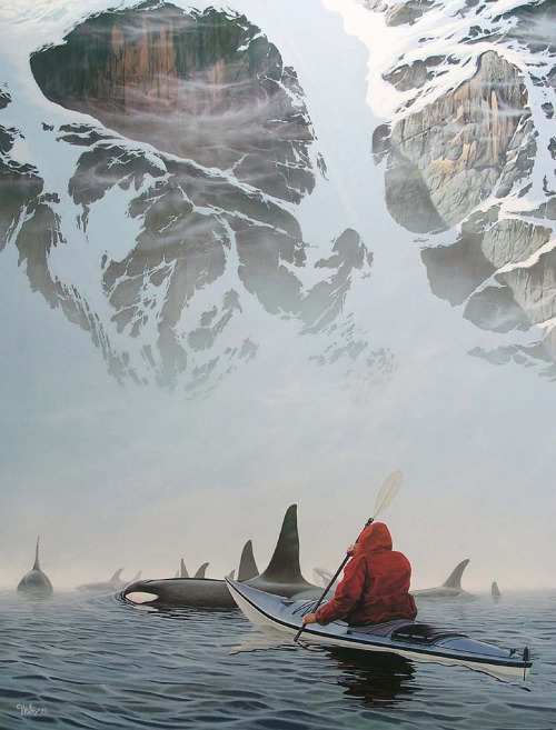 weseek:  Sea Kayaking with Killer Whales.