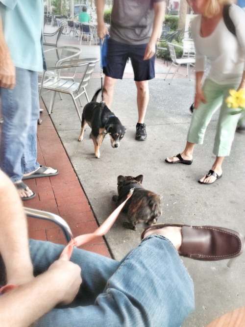 Meeting new friends in downtown St. Pete, spring 2013.