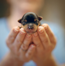 theanimalblog:  Newly Born. Photo by manyfires