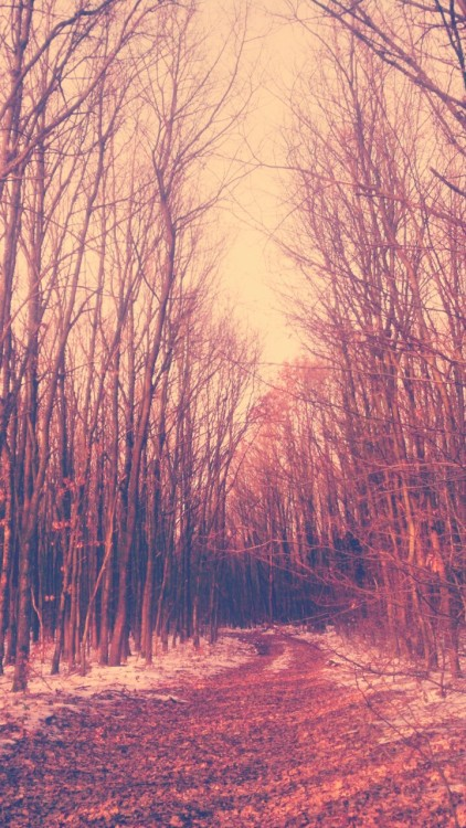 forest in lomo