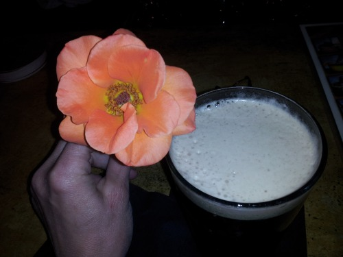Guinness and a flower from Erica's garden