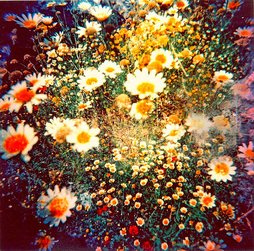 photography pretty cute Cool beautiful photo hipster ...