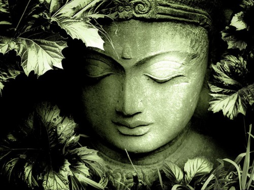 wallpaper wednesday buddha among leaves