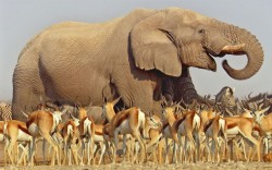 allcreatures:   An African elephant towers above herds of antelope and zebra as they congregate at a precious waterhole on the Etosha salt pan in Namibia, in a scene from David Attenborough's new BBC wildlife series Africa  Picture: BBC (via Pictures of the day: 28 December 2012 - Telegraph)