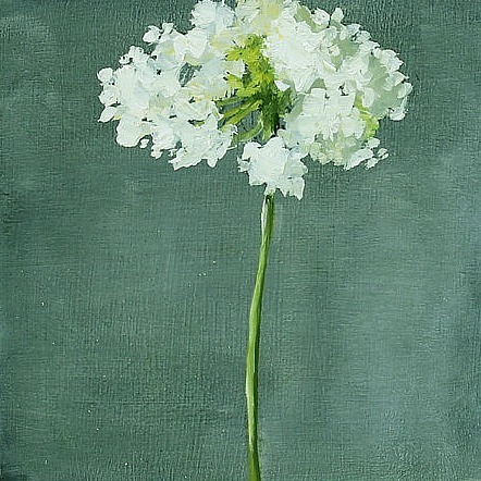 stilllifequickheart:  Hilda Oomen Queen Anne's Lace 2012 (a note about today's posts)