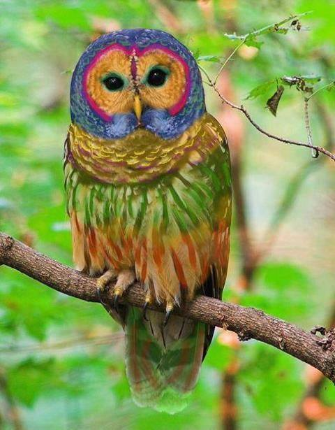 owl buho psychedelic colorful animals vibe