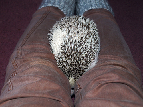 lokithehedgehog:  You can't see me