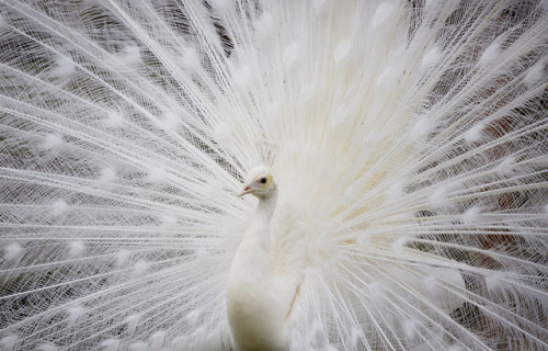 White by Synapped on Flickr.
