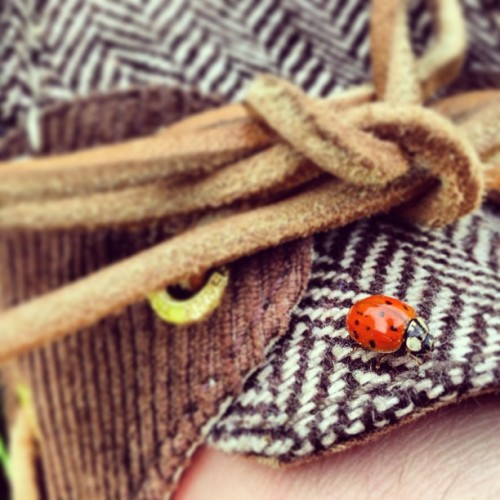 mydrunkkitchen:  I FEEL SO STRONGLY ABOUT LADYBUGS http://www.youtube.com/watch?v=dhX4tK1dVXk  THIS IS SO ADORABLE! Hanna is just out lovin life! She's appreciating the small things and taking the time to smell the roses :)