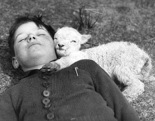A newly-born lamb snuggles up to a boy. UK, 1940 © Williams Fox