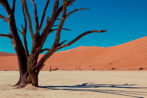 westeastsouthnorth:  Deadvlei, Namibia