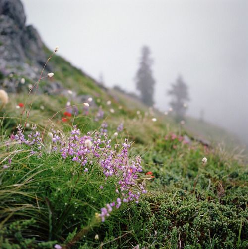 a mountain's wildflowers by manyfires on Flickr.