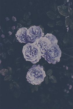 livethelifeyoudreamedabout:  Flowers | via Tumblr on @weheartit.com - http://whrt.it/Z2lmwV