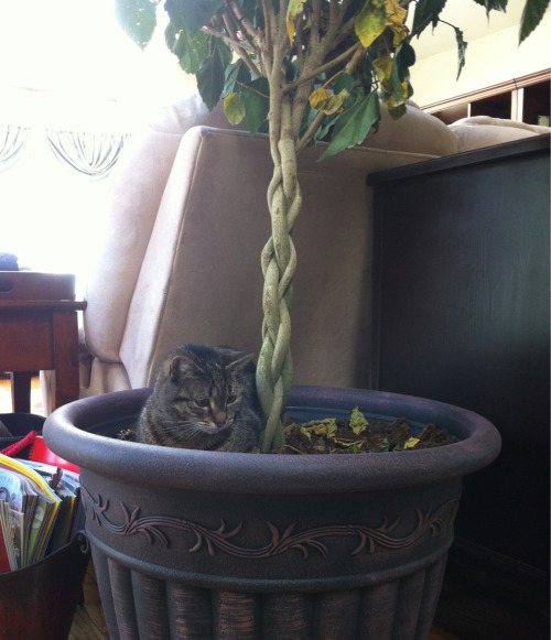 treehuggingarchitect:  megsonthemoon:  notkatniss:  Kitty isn't allow outside and she gets mad at us so she sits in the potted tree and pretends she is outside  SHE LOOKS SO SAD   Lol I'll need to try this with nudge now