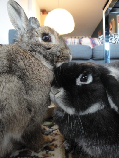 dailybunny:  Bunnies' Subtle Display of Affection Thanks, Chris