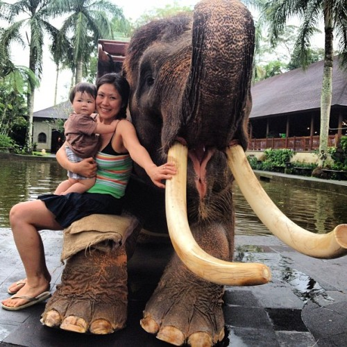 Sitting on a Sumatran elephant after a ride! #bali  (at Elephant Safari Park Taro)