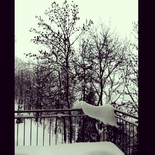 Looking out the big window.. #view #snow #snowing #trees #balcony #winter #vintage looking #Switzerland #leysin #swiss #Suisse #shms #uni