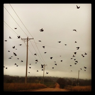 """An abundance of Black Birds means Cold Weather's a'commin'"" (at MsMoonHere)"