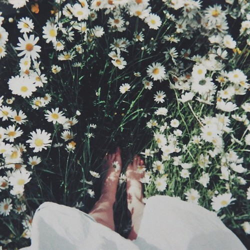 micabeza-mispensamientos:  flowers | Tumblr on We Heart It - http://weheartit.com/entry/62249834/via/NeverStopDreaming2307   Hearted from: http://anjo-de-fumar.tumblr.com/post/51066943827