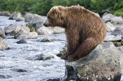 Photographer Sergey Gorshkov watched theis grizzly bear tire herself out fishing for salmon in a river before taking a well-deserved break in the Kronotskiy Reserve, Kamchatka, Russia.  Picture: Sergey Gorshkov/Solent