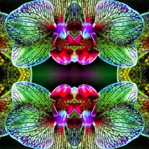 #flowers #remix #stolen #symmetry #mantra #meditation