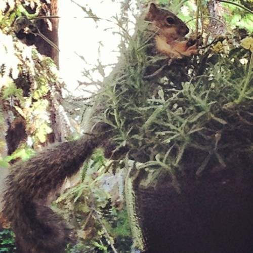 Pet squirrel posing.. :)