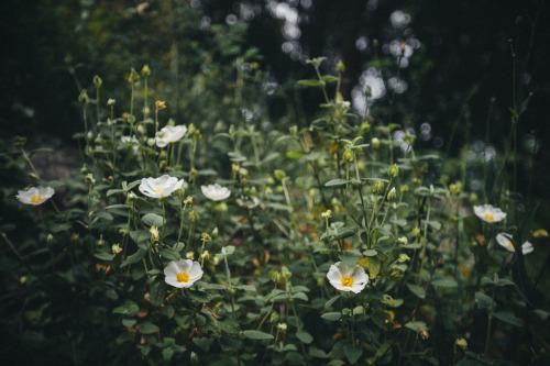 elenamorelli:  { joy of nature }