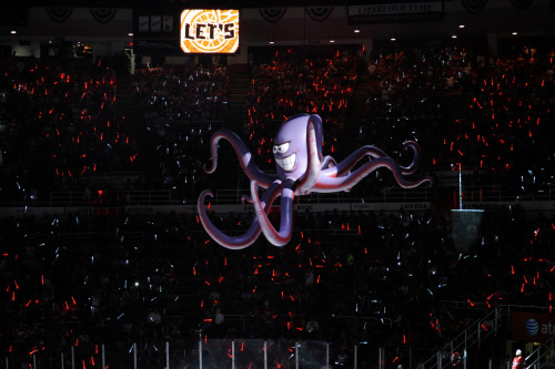 redwingsgirl:  Red Wings vs. Ducks - Game 3 (Western Conference Quarterfinals) (by MiHockeyNow)