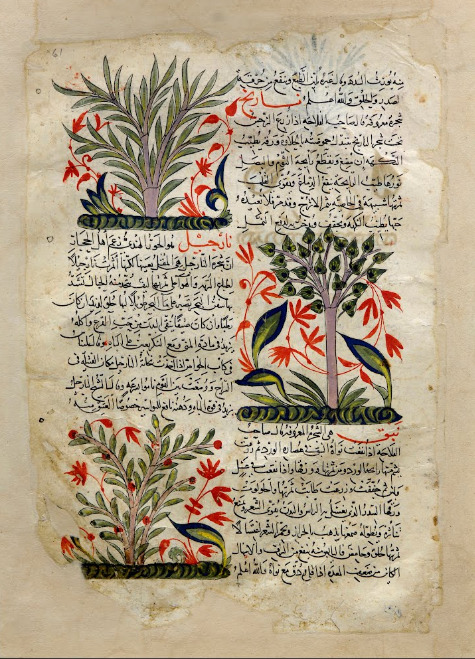 mediterraneum:  Illustrations in a book about plants, Syria, 1275-1300.