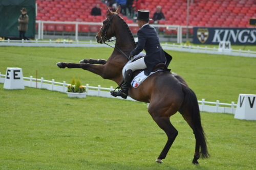 "underhuntressmoon:   A little trouble after a dressage test at Badminton Horse Trials 2013  ""Ruhhh look at me I'm a human. I stand on two legs and make horses wear stupid things. Blahblahblah I'm the apex species but I complain about calories.""  ""Please don't kill me!  I live in an indefensible village and have no martial training!""  ""I like cheese!  And religion!  Our laws will keep us safe!"""