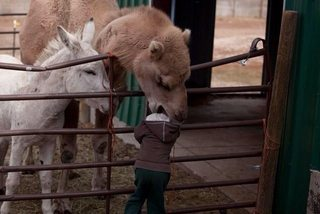 glitterweave:  Your child is being eaten by a camel. Do you: a) save your child orb) take a photo.  In their defense, perhaps it wasn't their child. Sincerely,A guy without children but with a camera and camel blog that ain't gonna write itself.