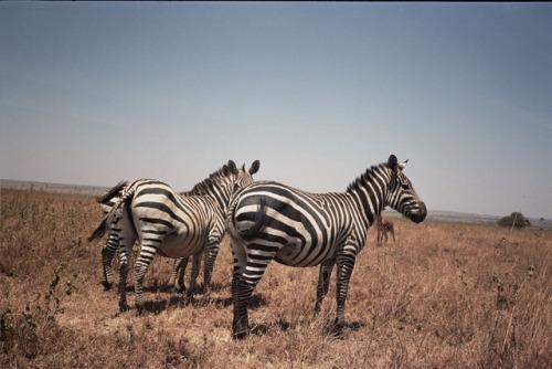 35mm 35mm film 35mm photography kenya nairobi