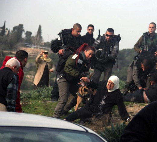 "shame on Israel "" 28 January 2013: A Palestinian woman randomly gets attacked and knocked over by a search dog of the Israeli forces near Silwan, East Jerusalem. The soldiers were in the area in order to keep the homeowners away from their own land, as Israeli bulldozers illegally demolished the area on private Palestinian land, without any permission. Four buildings and a sewage network was destroyed. Photo: Mohammad al-Fateh.""  sura93:  28 January 2013: A Palestinian woman randomly gets attacked and knocked over by a search dog of the Israeli forces near Silwan, East Jerusalem. The soldiers were in the area in order to keep the homeowners away from their own land, as Israeli bulldozers illegally demolished the area on private Palestinian land, without any permission. Four buildings and a sewage network was destroyed. Photo: Mohammad al-Fateh."