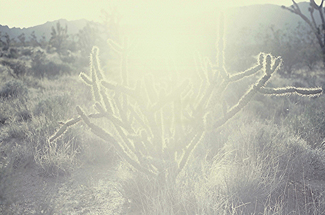 untitled on Flickr.cactus ghost // mojave desert