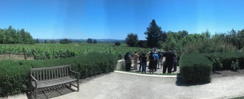 A great view of another plot of vineyards from the Sensory Garden at the VML Vineyard property!