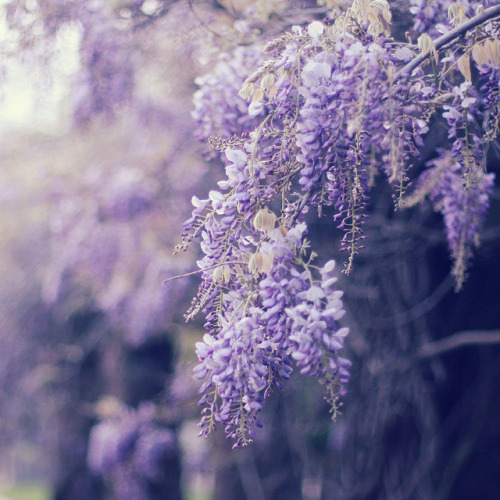 mykindafairytalee:  untitled by liz.rusby on Flickr.