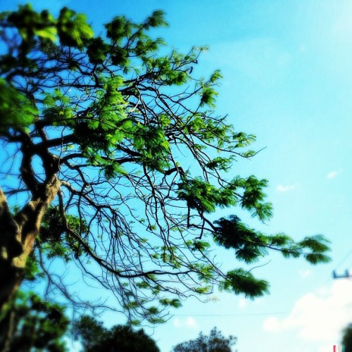 clear blue skies in tagaytay #iphoneography