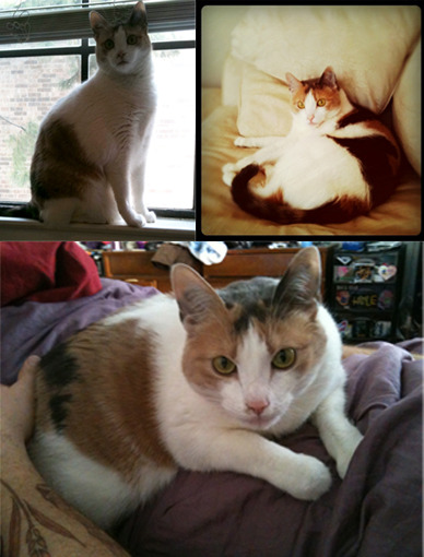 Blythe is a female, calico. 20(+-)lbs.  She's declawed in the front and doesn't have a collar.  Missing 1/3/13.   If you're in the Kayewood/Robinwood/Greenwood (Idiot's Hill)area of Denton and see her, please contact me!