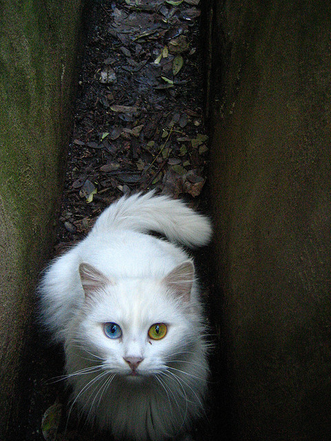 bowie cat # 2 by maximorgana on Flickr.bowie cat # 2