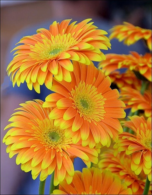 flowersgardenlove:  Charming Yellow Flowers Garden Love