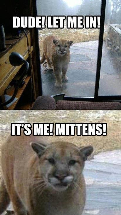 ninjalobster:  Poor mittens…