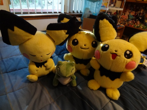 pacificpikachu:  1/1 scale Pichu brothers plus sleepy Gizamimi Pichu, who is basically 1/1 scale. Substitute plush for size reference.
